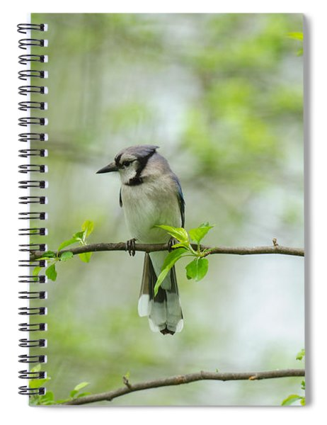 Young Jay Thinking Spiral Notebook