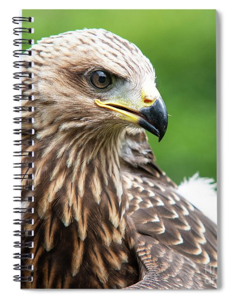 Young Kite Spiral Notebook