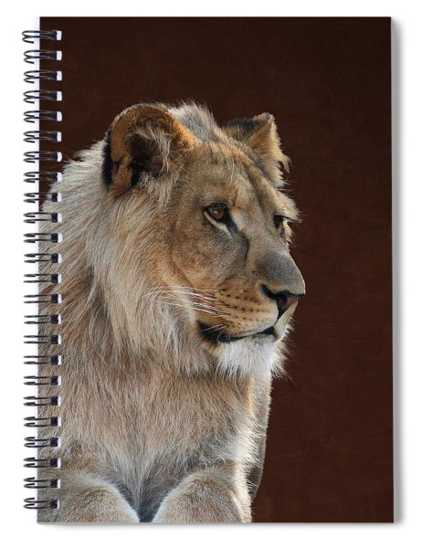 Young Male Lion Portrait Spiral Notebook