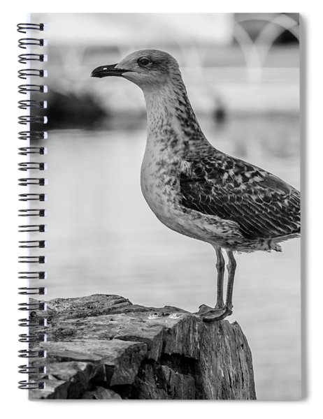 Young Seagull Spiral Notebook