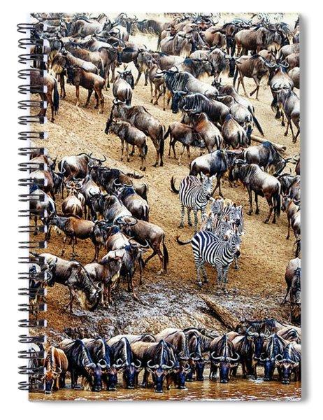 Zebra In Crowd Of Wildebeest Spiral Notebook