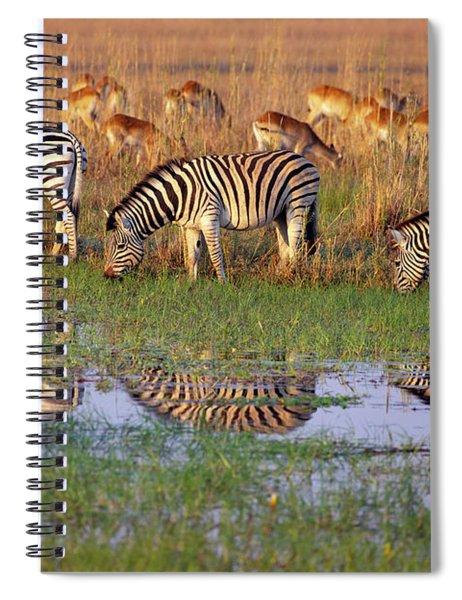Zebras In Botswana Spiral Notebook