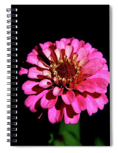 Zinnia Wonder Spiral Notebook