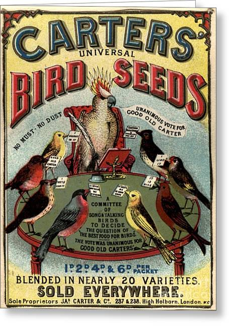 1890s Uk Carters Bird Seed Birds Greeting Card by The Advertising Archives
