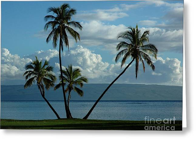 A Little Bit Of Paradise Greeting Card by Vivian Christopher