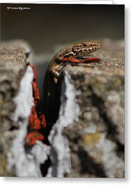Greeting Card featuring the photograph  A Lizard Emerging From Its Hole by Stwayne Keubrick