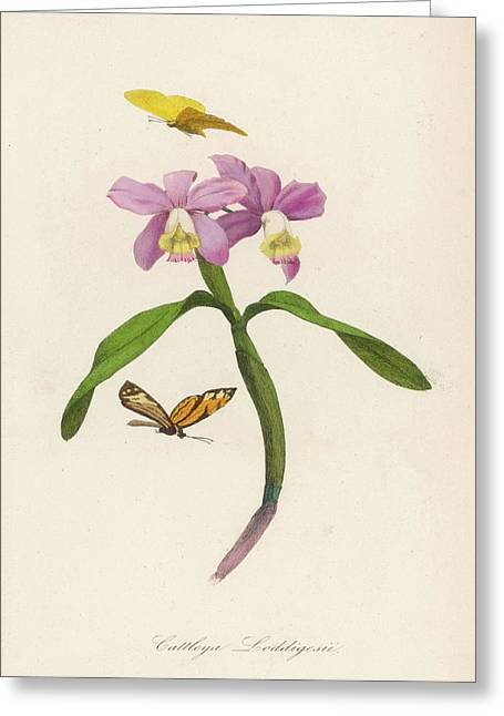 A Species Of Orchid         Date Circa Greeting Card