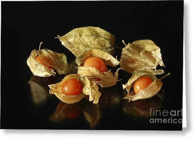 A Taste Of Columbia Physalis Aztec Golden Goose Berry  Greeting Card by Inspired Nature Photography Fine Art Photography