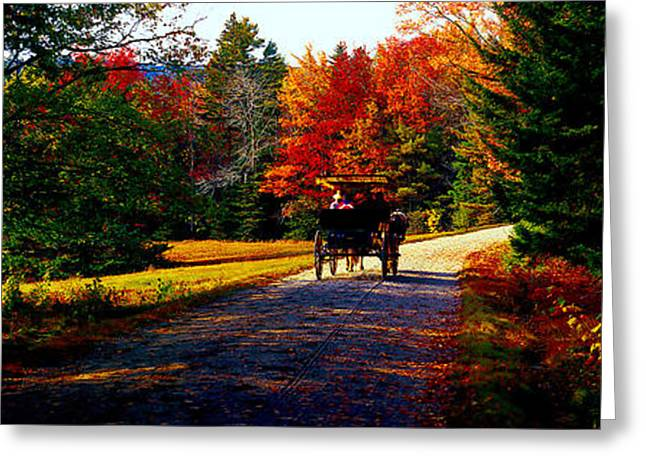 Greeting Card featuring the photograph  Acadia National Park Carriage Trail Fall  by Tom Jelen