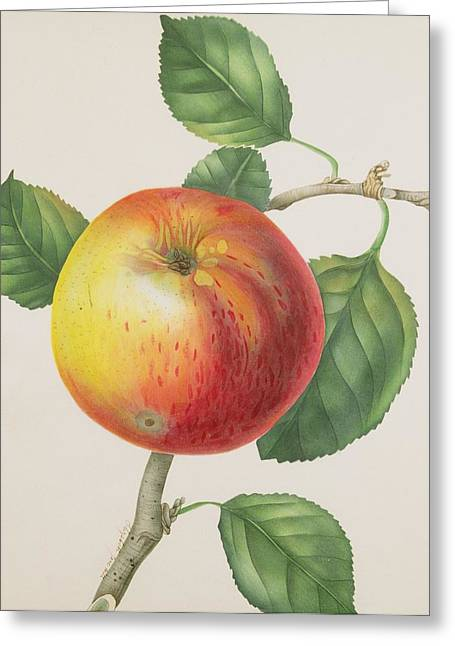 An Apple Greeting Card by Elizabeth Jane Hill