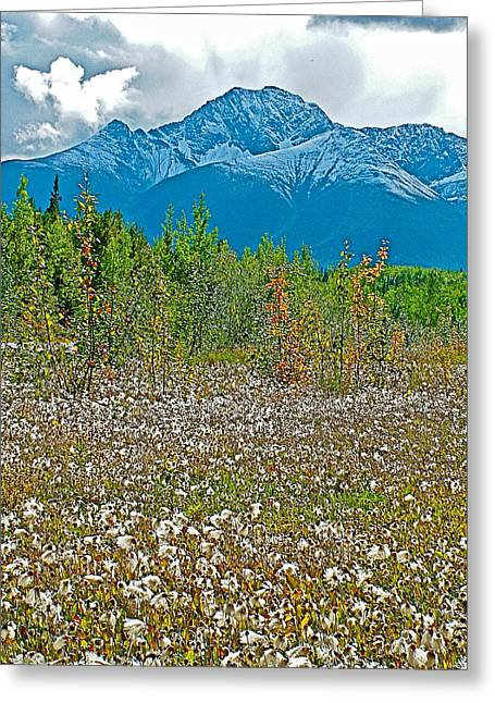 Arctic Cotton Along Cassiar Highway-british Columbia Greeting Card by Ruth Hager
