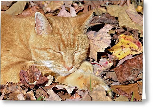 Autumn Dreaming Greeting Card by Susan Leggett