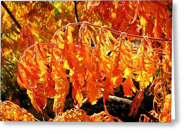 Autumn Splendor 1 Greeting Card by Will Borden