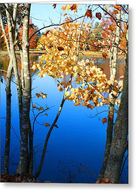 Autumn Trees On The Lake Greeting Card