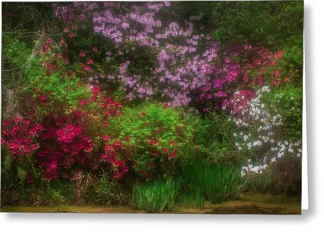Azaleas In Bloom Greeting Card
