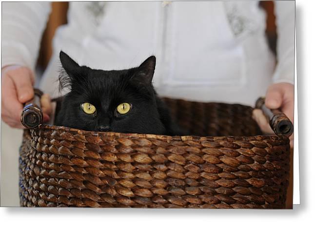 Basket Cat Greeting Card by Renee Forth-Fukumoto