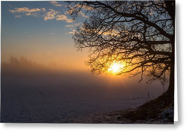 Sunbeams Pour Through The Tree At The Misty Winter Sunrise Greeting Card