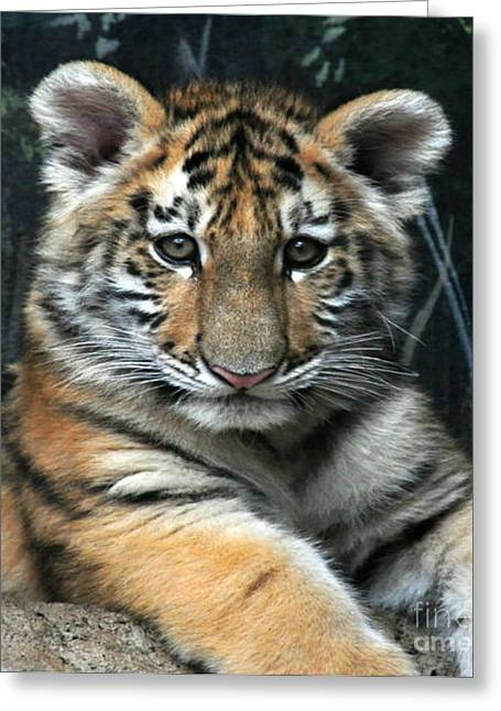 Bengal Tiger Cub Im The Baby Greeting Card