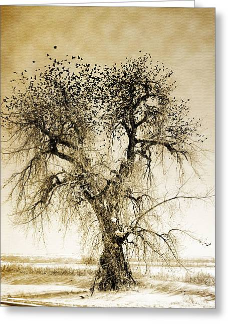 Bird Tree Fine Art  Mono Tone And Textured Greeting Card