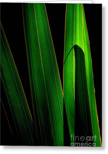 Black And Green Greeting Card by Michelle Meenawong
