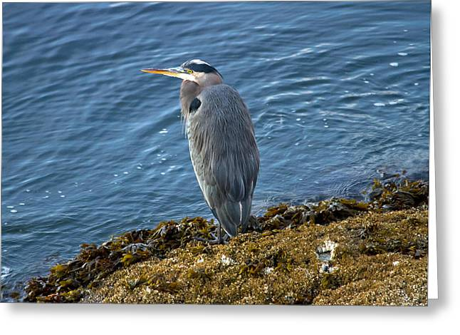 Greeting Card featuring the photograph  Blue Heron On A Rock by Eti Reid