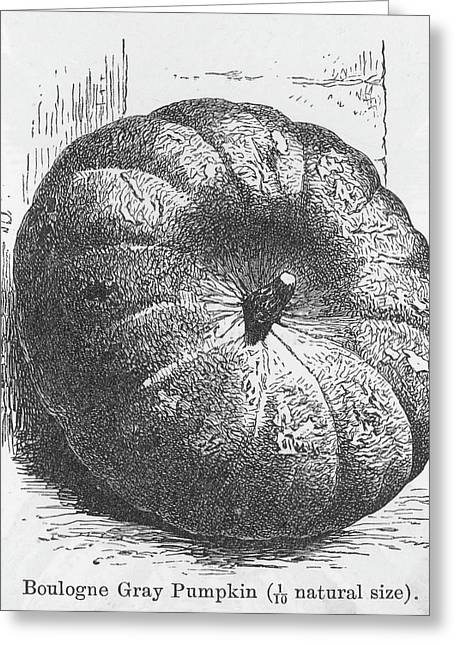 Boulogne Gray Pumpkin Greeting Card by Mary Evans Picture Library