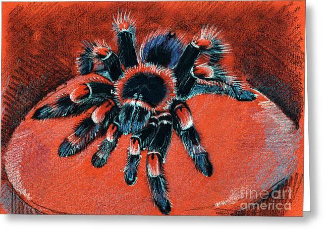 Brachypelma Smithi Redknee Tarantula  Greeting Card