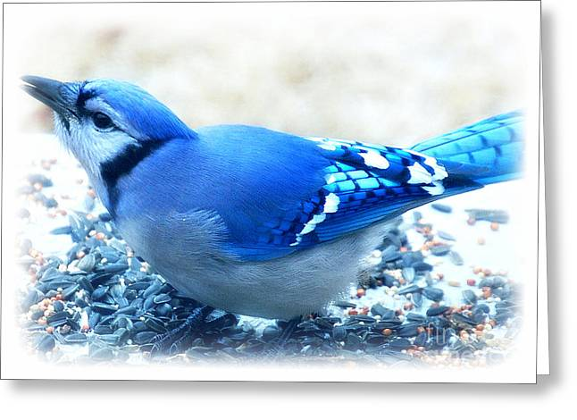 Bright Blue Jay  Greeting Card