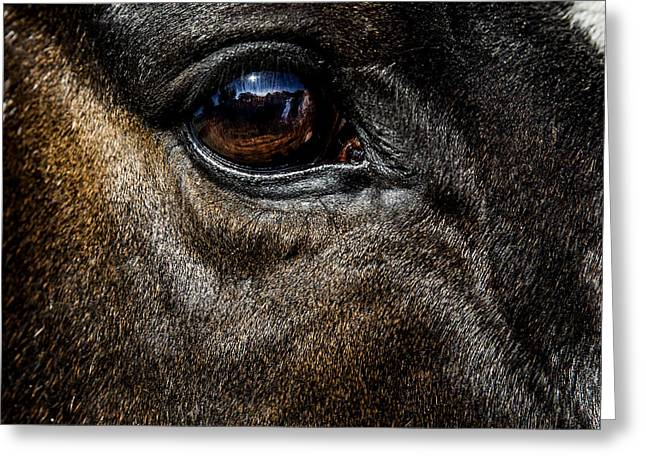 Bright Eyes - Horse Portrait Greeting Card by Holly Martin