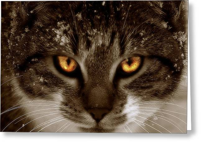 Cat Eyes Greeting Card