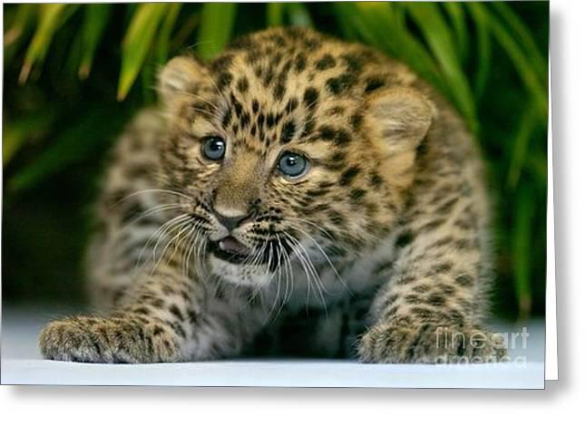 Cheetah Cub Im Gonna Getcha Greeting Card
