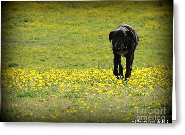 Cody In Black And Yellow Greeting Card