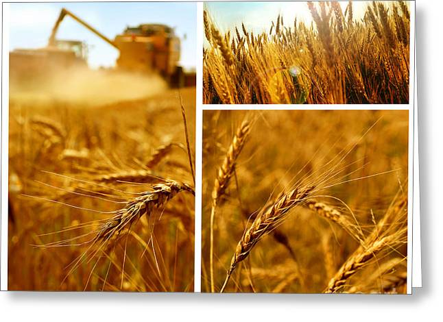 Collage Fields And Grain Greeting Card by Boon Mee