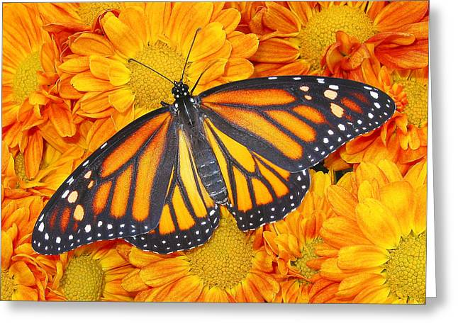 Color Matching In Nature Greeting Card by David and Carol Kelly