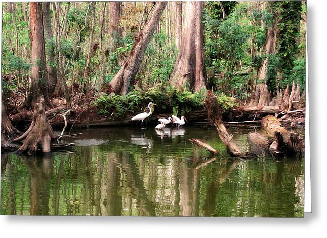 Cypress Swamp  Greeting Card by Peg Urban