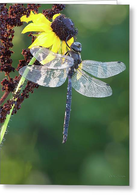 Darner Greeting Card