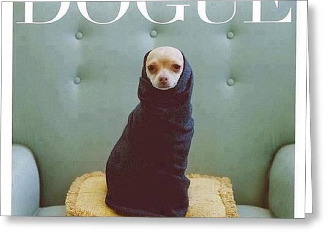 😂😂😂😂 #dogue #vogue Greeting Card by Matheo Montes