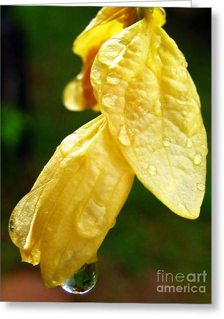 Drop On Yellow Flower Greeting Card by Michelle Meenawong