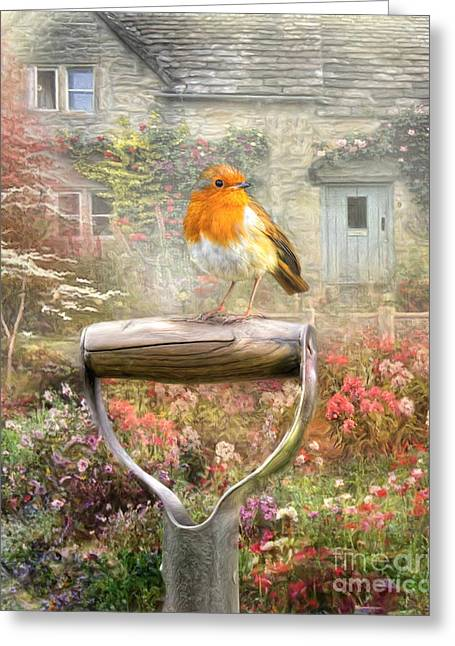 English Robin Greeting Card