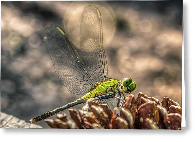 Greeting Card featuring the photograph  Erythemis Simplicicollis by Rob Sellers