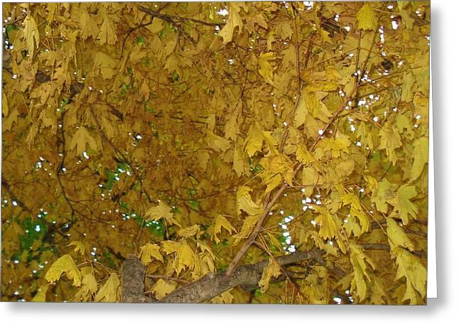Greeting Card featuring the photograph  Fall Amur Maple  by J L Zarek