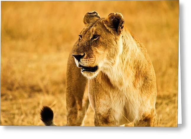 Female Lion Greeting Card by Kongsak Sumano