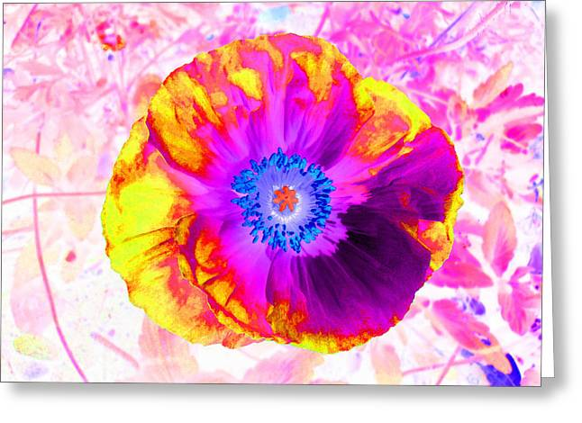 Fervor And Passion Flower 2 Greeting Card by Kenneth James