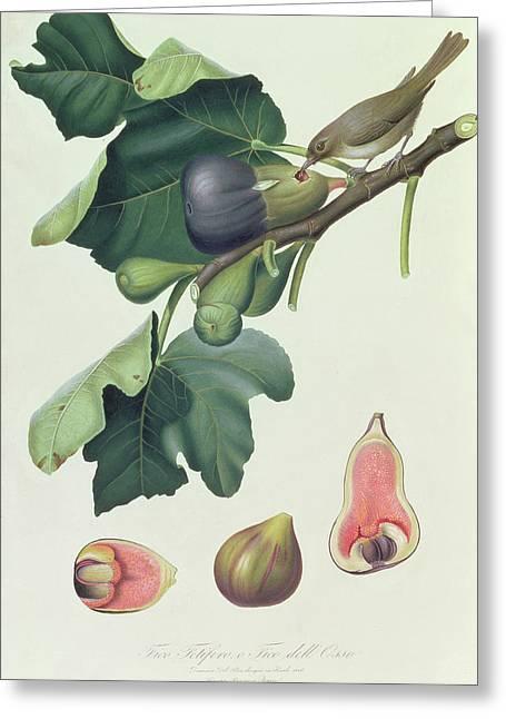 - Fico Fetifero And Fico Dell Osso Greeting Card by Giorgio Gallesio