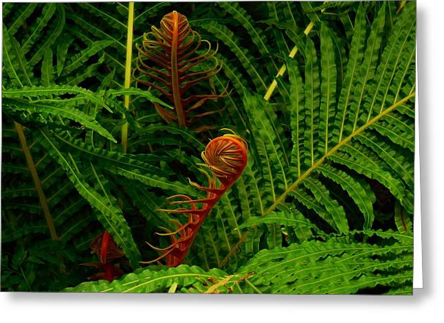 Fiddlehead Fern Fronds Greeting Card by Movie Poster Prints