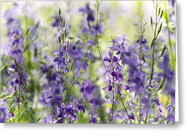 Fields Of Lavender  Greeting Card by Saija  Lehtonen