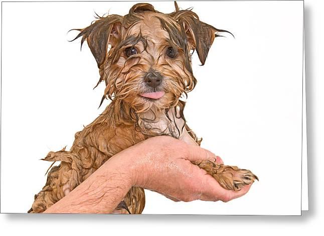 First Bath Greeting Card