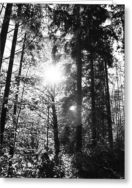 Forest Greeting Card by Falko Follert