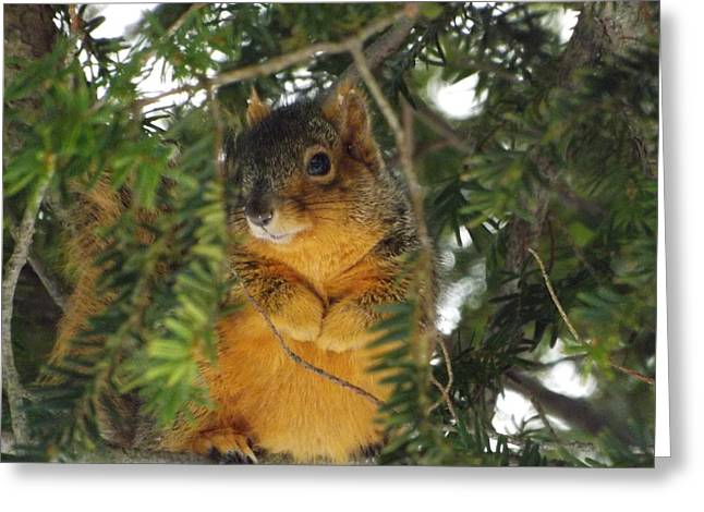 Fox Squirrel Greeting Card by Dennis Pintoski