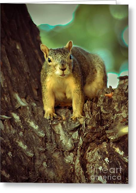 Fox Squirrel Greeting Card by Robert Bales